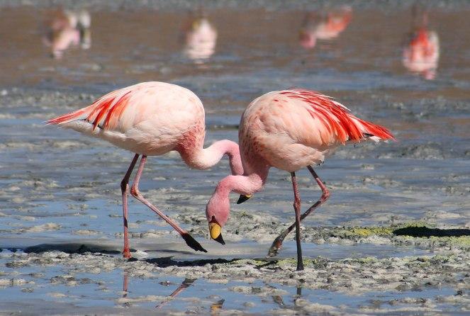 FlamingoPatronus1.jpg